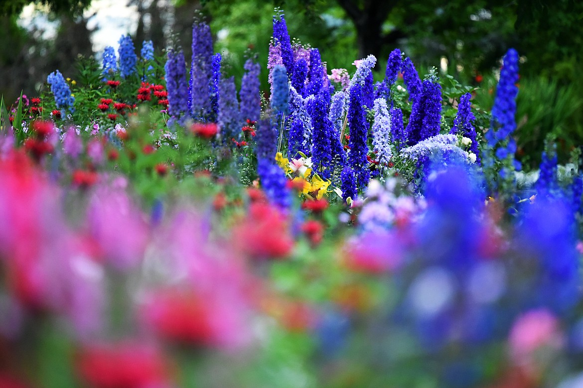 A variety of summer flowers bloom along a garden path during a Splendid Summer Evenings self-guided visit at Bibler Home and Gardens in Kalispell on Wednesday, July 22. Possible dates for future self-guided visits include their Sweet Summer Days on Aug. 3-4, though all tickets must be purchased in advance. (Casey Kreider/Daily Inter Lake)