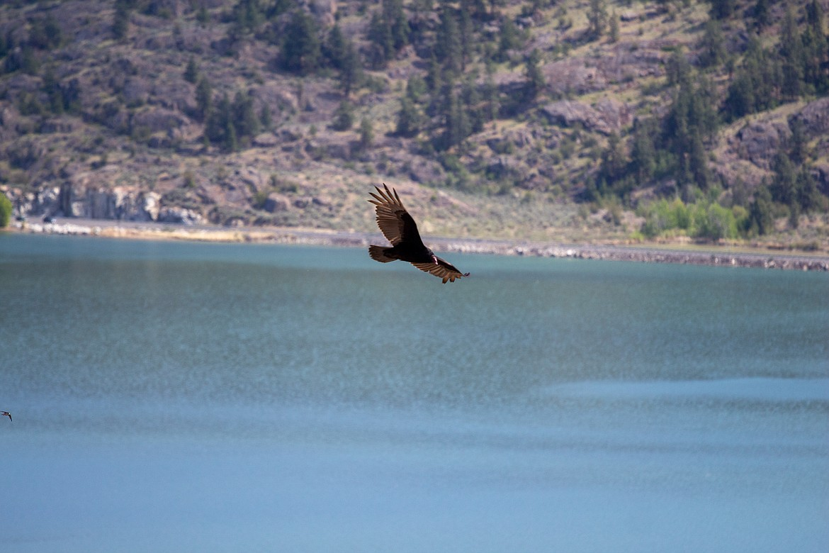 Soaring birds, and other wildlife, are a common sight for visitors looking out from the heights of Steamboat Rock.