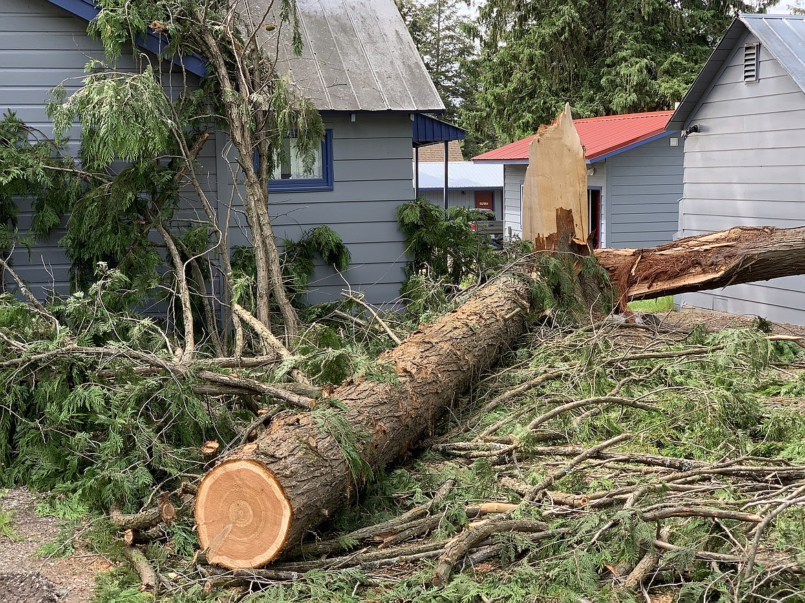 Sunday morning's thunderstorms brought down this tree at the Flathead Lake Resort in Woods Bay. (Jeremy Weber/Bigfork Eagle)
