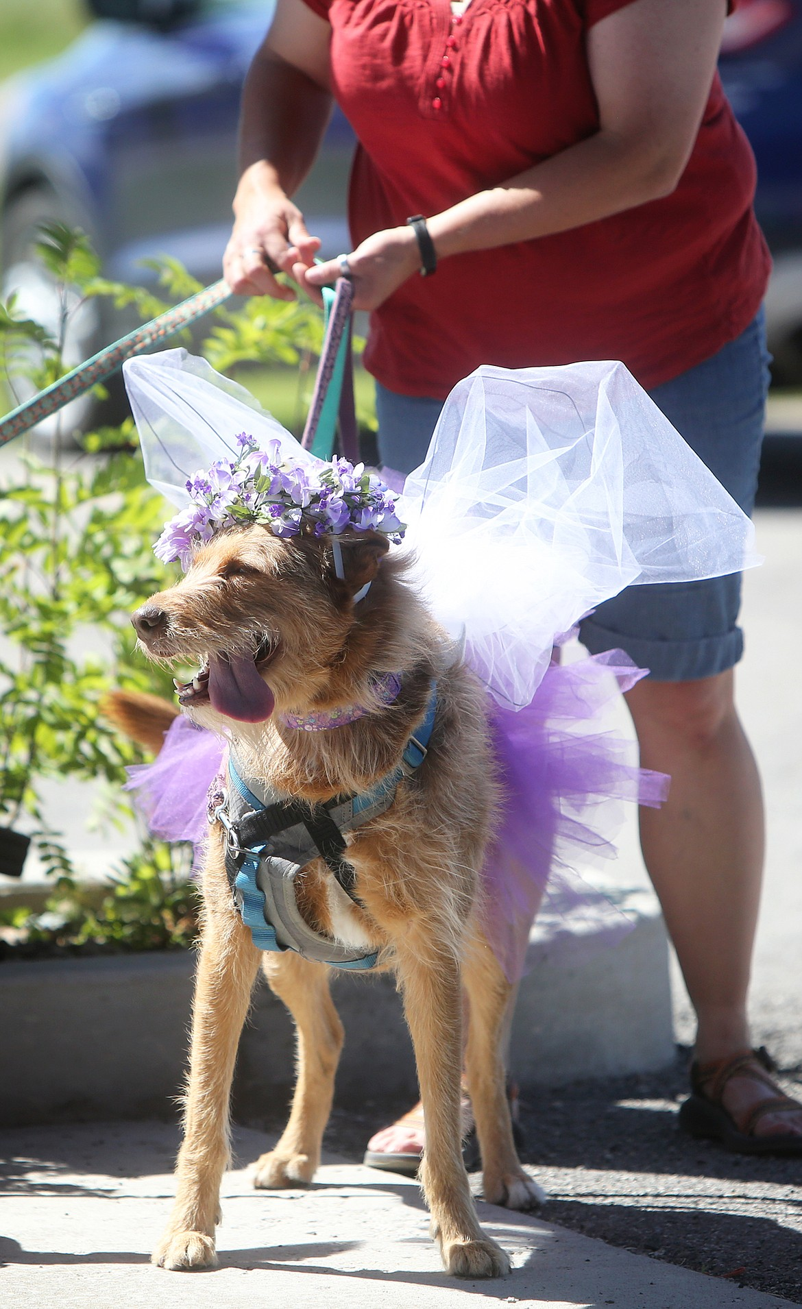 $ID/NormalParagraphStyle:Harriet Dent said she loved seeing the dogs dressed up for her birthday most of all.