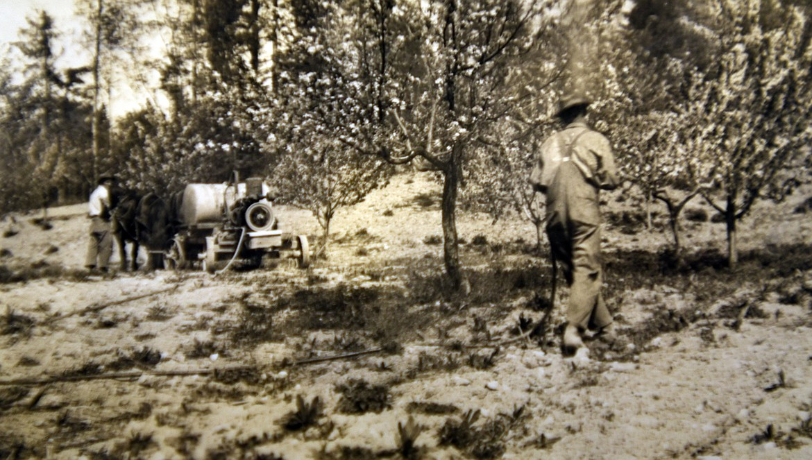 Adam and Eby Bowman spraying the orchard with a horse-drawn sprayer in the 1930s. (photo provided)