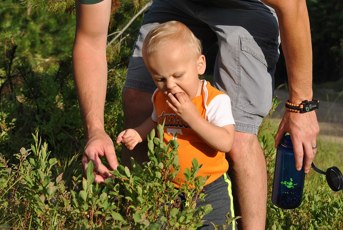 One-year-old Onyx Quinlivan enjoys his first summer picking. (Amy Quinlivan/Mineral Independent)