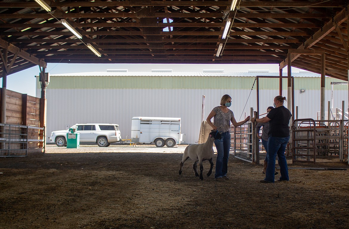 Samantha Rodeback, center, brings in livestock for her daughter, Brydon Stacy, on Wednesday afternoon at the Grant County Fairgrounds.