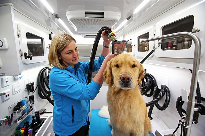 Mobile Spaw owner Stacia Reeser blow dries Cache inside her mobile pet grooming salon.