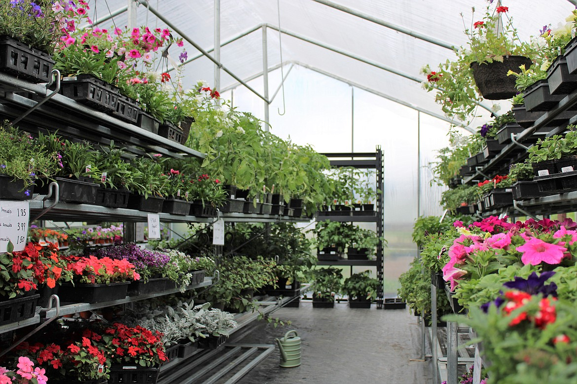 Bedding plants, vegetables, trees, shrubs, flowers and a lot more is available at the newly reopened business.