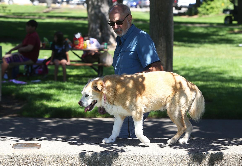 BILL BULEY/Press   Bob Aha walks his dog Emma at City Park on Monday.