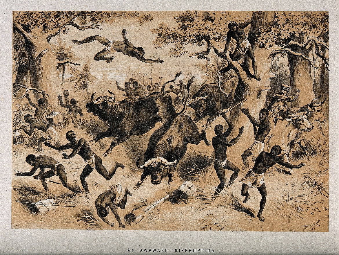 CREATIVE COMMONS   David Livingstone and followers being attacked by buffaloes.