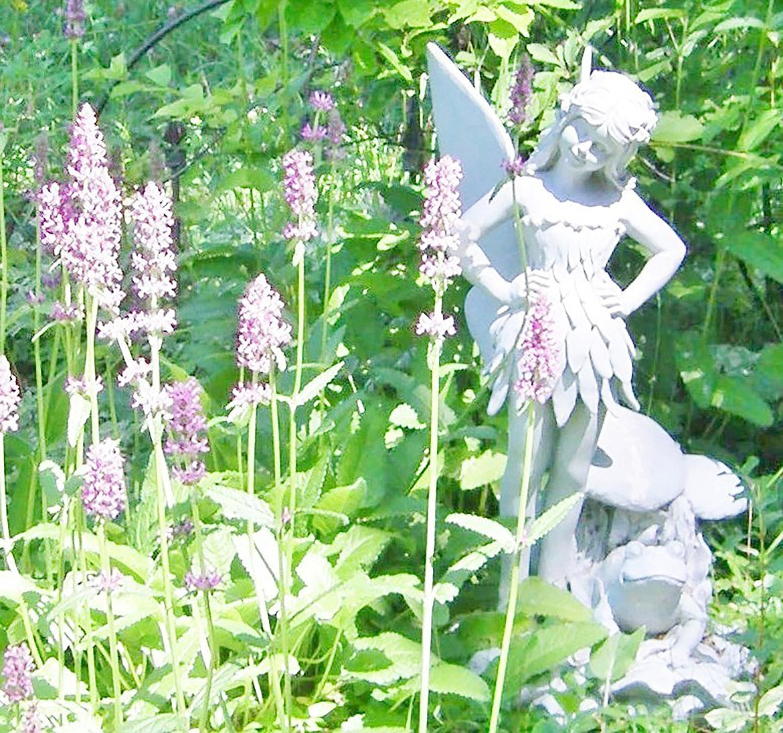 Garden fairy inspects this summer's crop of Betony.