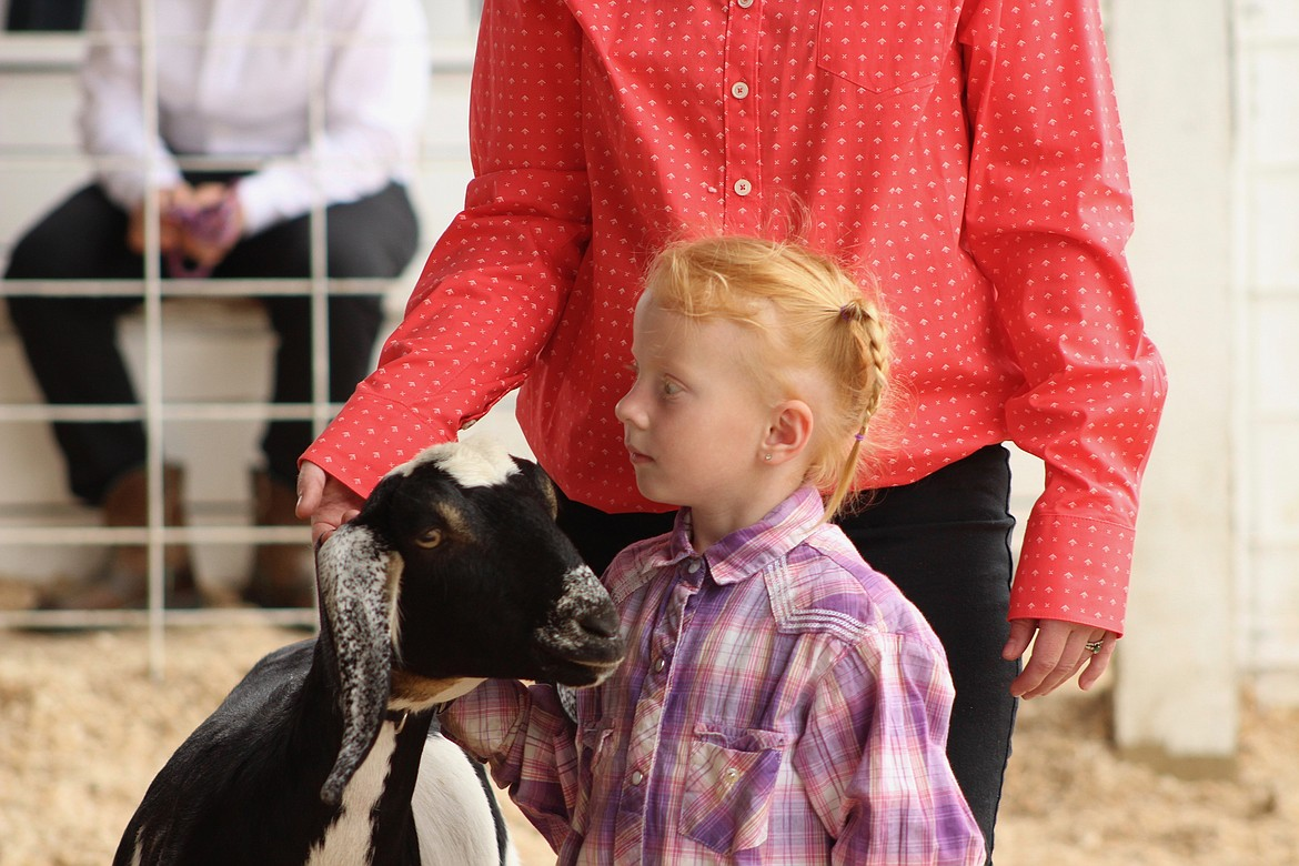 (Photo by HANNAH NEFF)   Pee Wee showman Keely Vanhorn, 5, shows off her Nubian doe, Hope, in her first dairy goat show Friday morning at the Bonner County Fairgrounds.