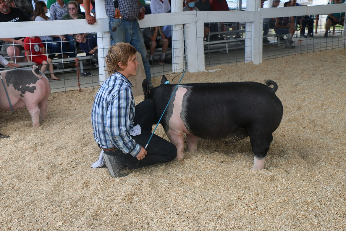 A 4-H'er rests as he wait for his turn to show his swine.