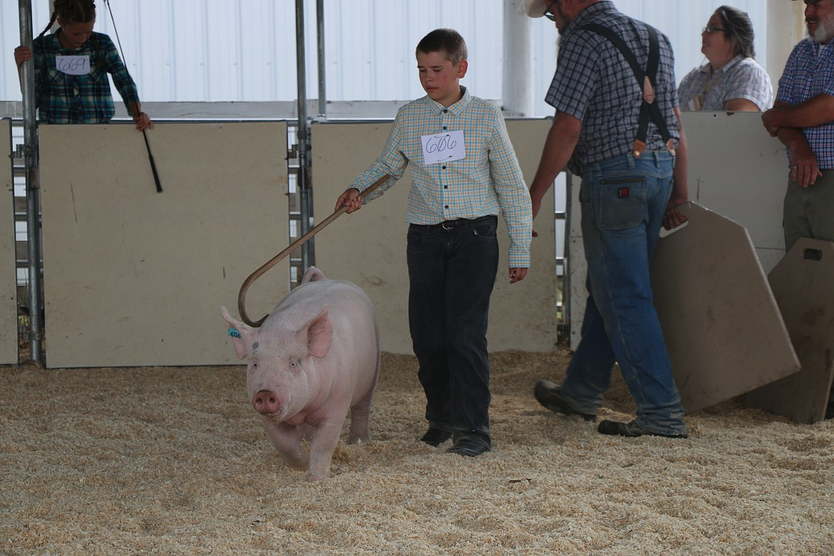 A youngster shows his pig at the Bonner County Fair last week.