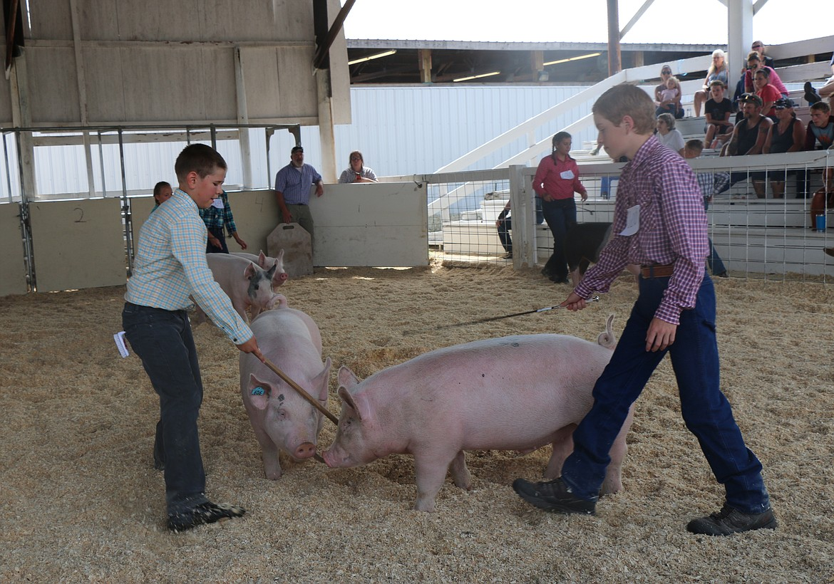A pair of local 4-H'ers take part in a swine event at last week's fair.