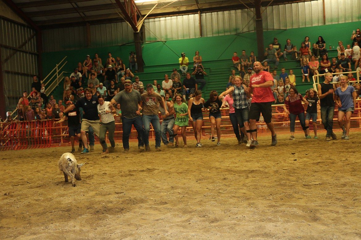 Older pig scramble contestants had to contend with attempting to catch a greased pig as part of a three-legged challenge.