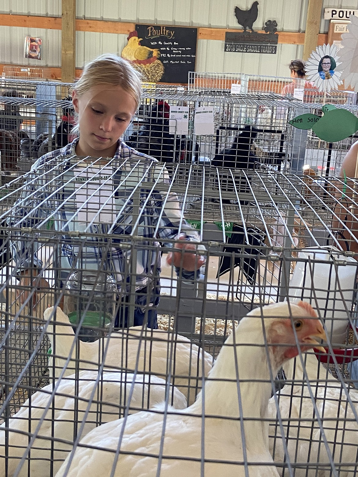 Molly Sloan, who is a member of the Gold 'n' Grouse 4-H Club, takes care of her chickens at the Bonner County Fair last week.