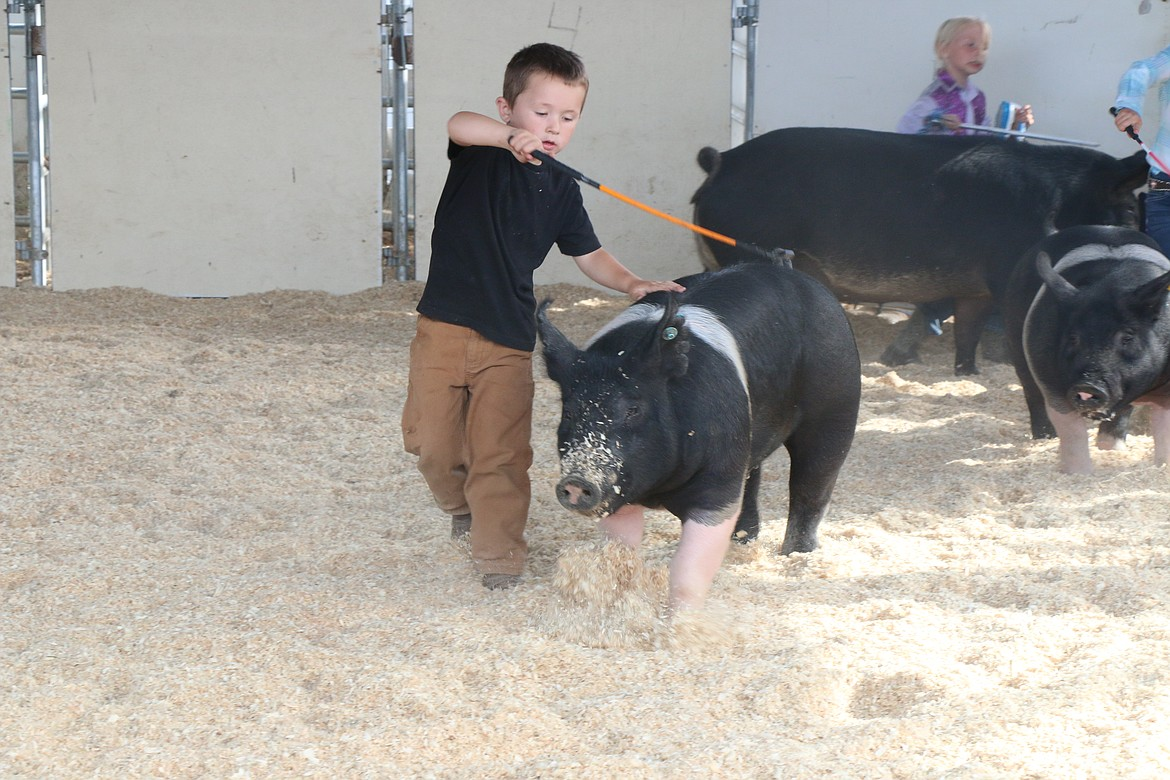 A youngster takes part in a swine event at the Bonner County Fair.