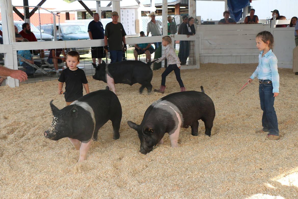 Youngsters take part in a swine event at the Bonner County Fair last week.