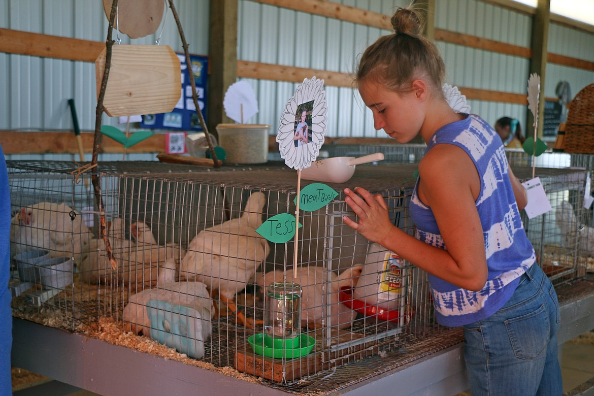 Tess Sloan, a member of the Gold 'n' Grouse 4-H Club, feeds her chickens at the Bonner County Fair.