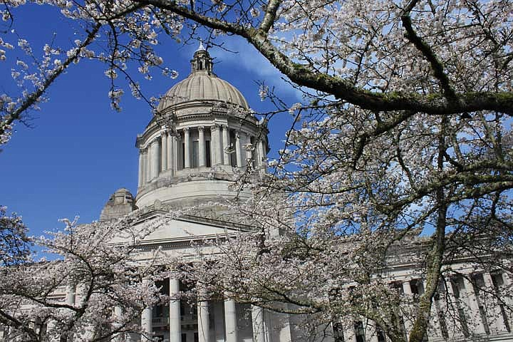 The Washington State Capitol dome against a blue sky with cherry tree branches in the foreground.