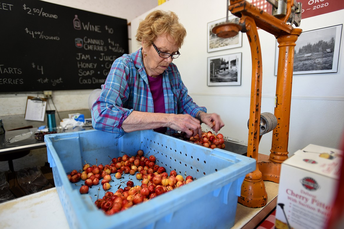 Marilyn Bowman sorts cherries at her family's roadside stand. (Jeremy Weber photos/Daily Inter Lake)
