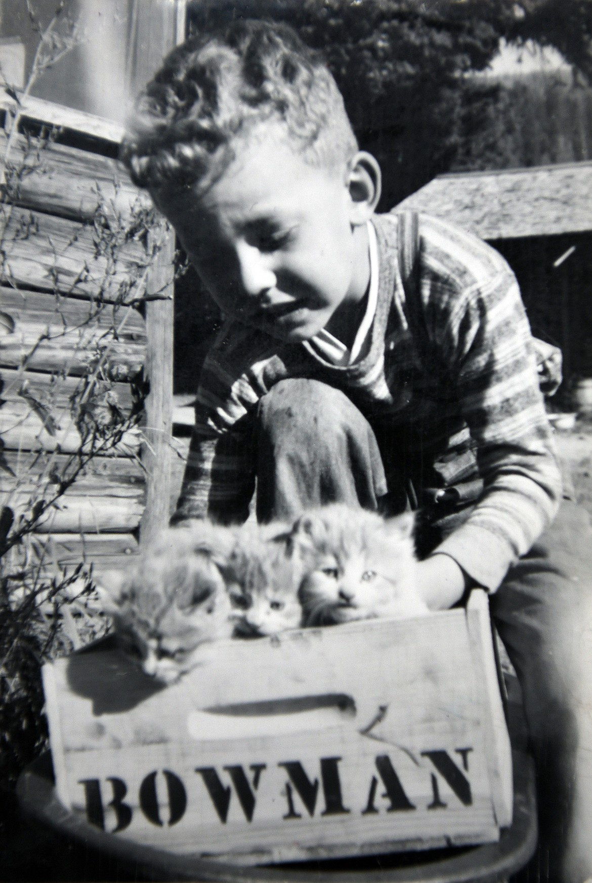 A young Jerry Bowman carries a litter of kittens around the orchard in one of the family's cherry crates. (photo provided)