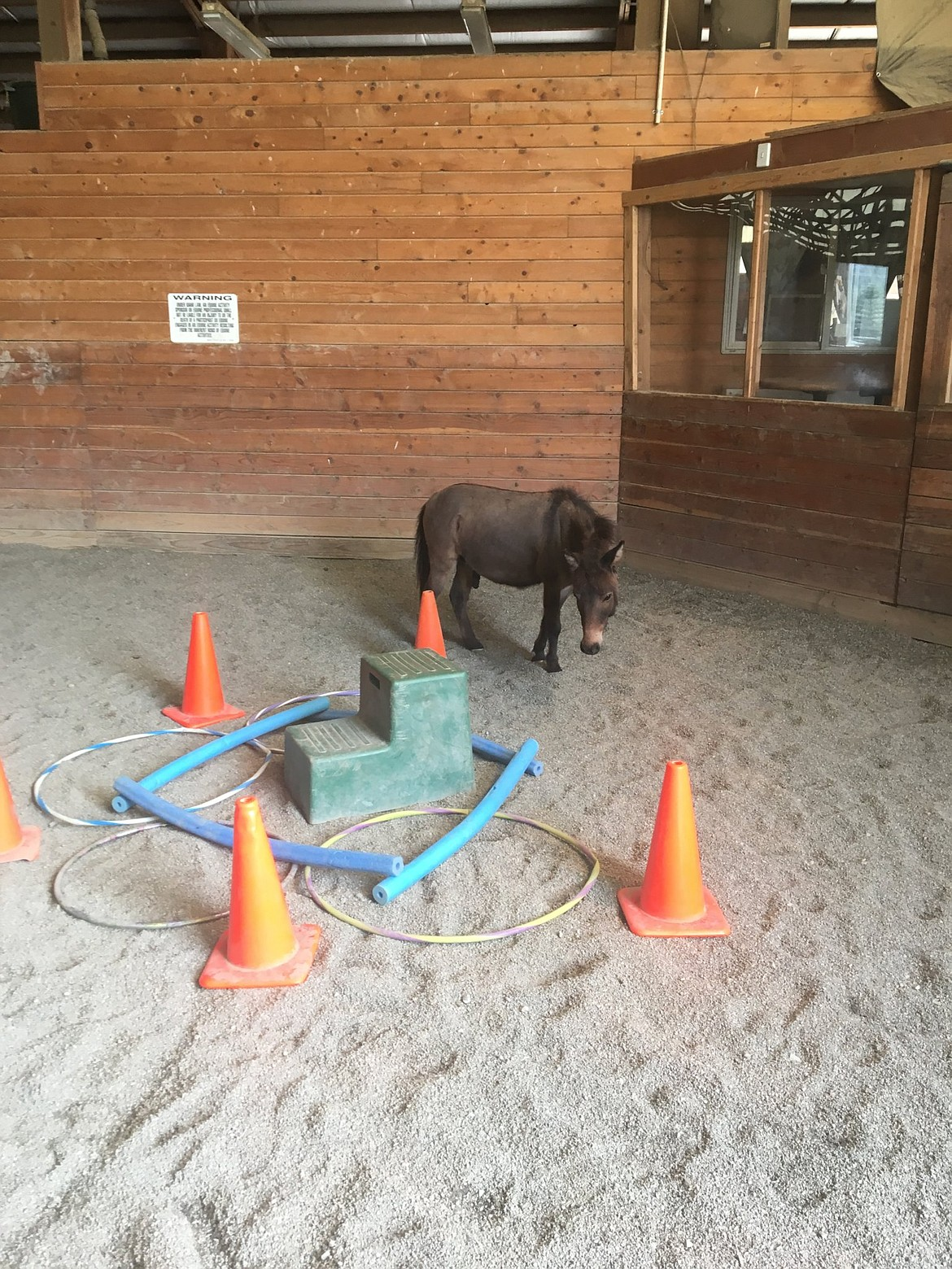 A donkey interacts with a space built by a client to represent their anger. Horses' (and donkeys') responses to clients' work can help clients find deeper meaning based on their interpretation of animals' actions.
