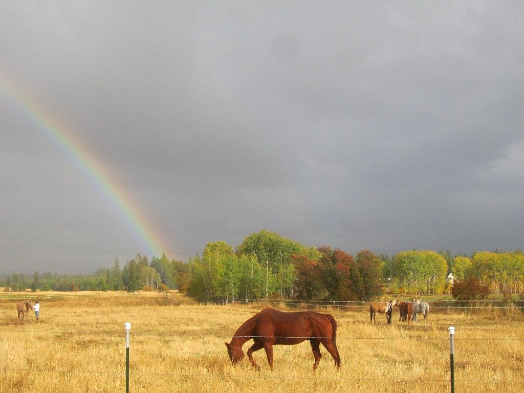 Grazing horses at Mica Meadows, where Idaho Youth Ranch's Equine Assisted Psychotherapy sessions take place. Smith says the environment itself is beneficial for clients and staff alike.