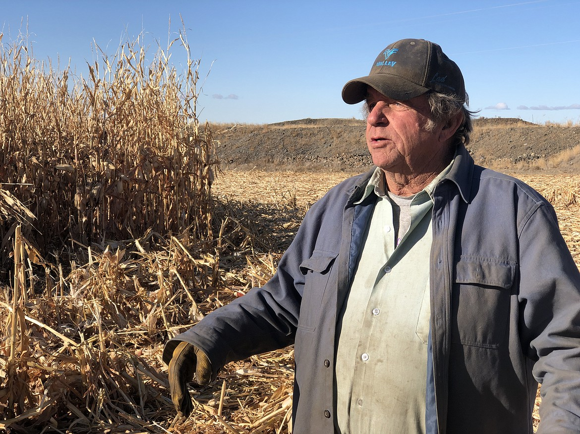Stratford-area farmer Dan Hendrickson out in the cornfield he's harvesting with a 40-year-old New Holland combine he and his sons Quinton and Preston brought back to life earlier this year.