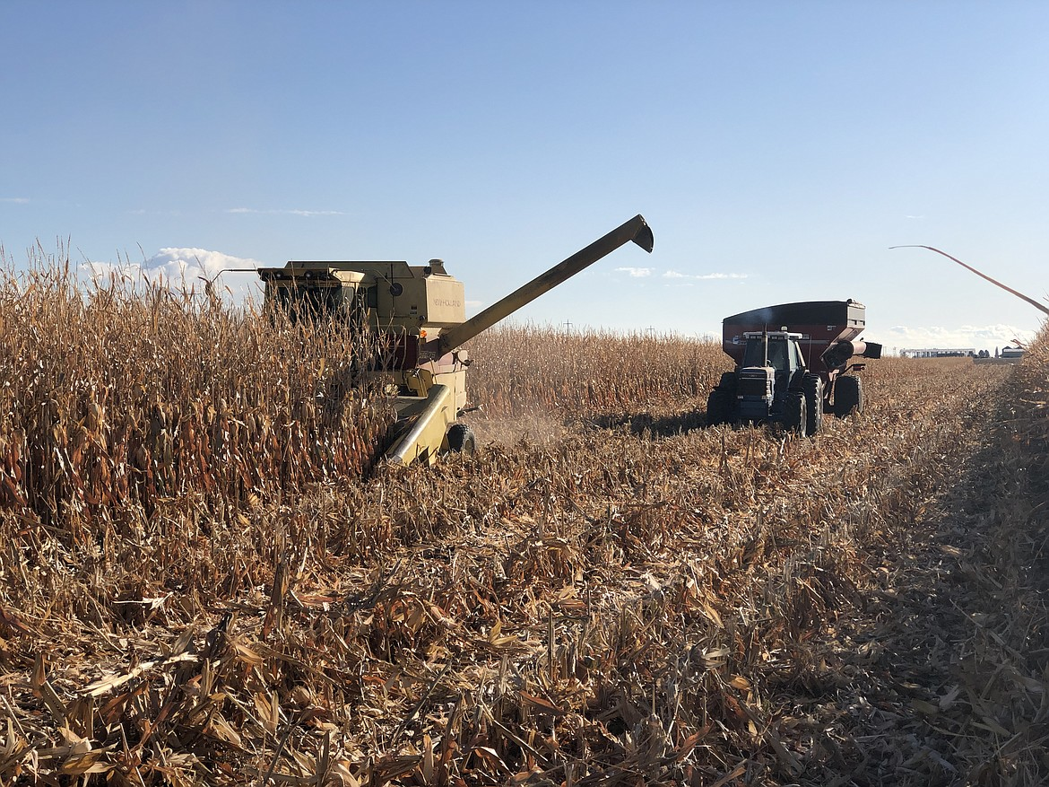 The 40-year-old New Holland TR75 combine harvesting a field of corn.