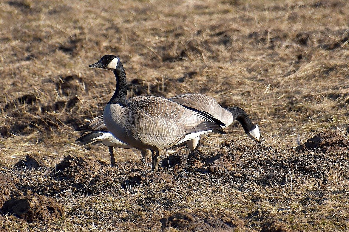 """Geese hang out in this """"adventure drive"""" photo captured by local photographer Robert Kalberg."""