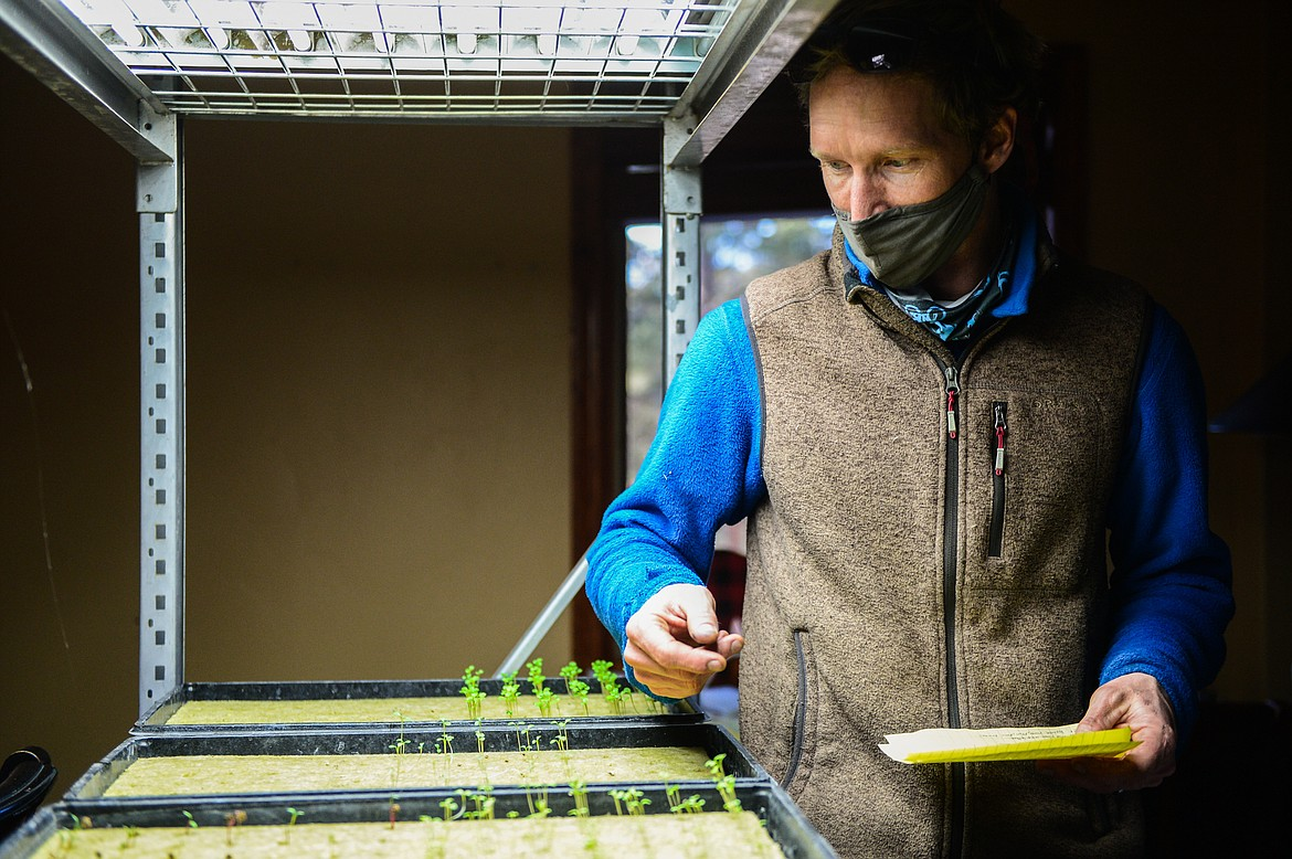 General manager Brett Svetlik grows much of the produce used in Dog Creek Lodge's menu hydroponically. (Casey Kreider/Daily Inter Lake)