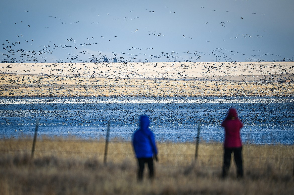 People watch as migratory birds take flight from a pond at Freezout Lake Wildlife Management Area on Monday, March 29. (Casey Kreider/Daily Inter Lake)