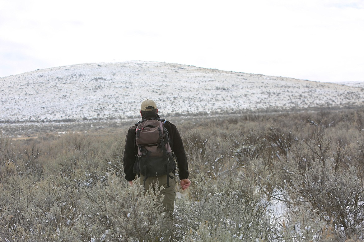 WDFW biologist and pygmy rabbit coordinator Jon Gallie hikes through the active burrows on the Beezley Hills Preserve in February.