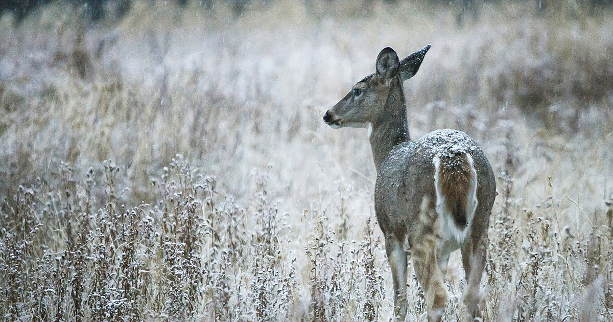 Chronic wasting disease test developed by scientists