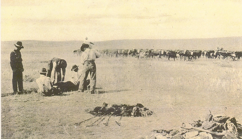 Branding cattle in Old West Montana.
