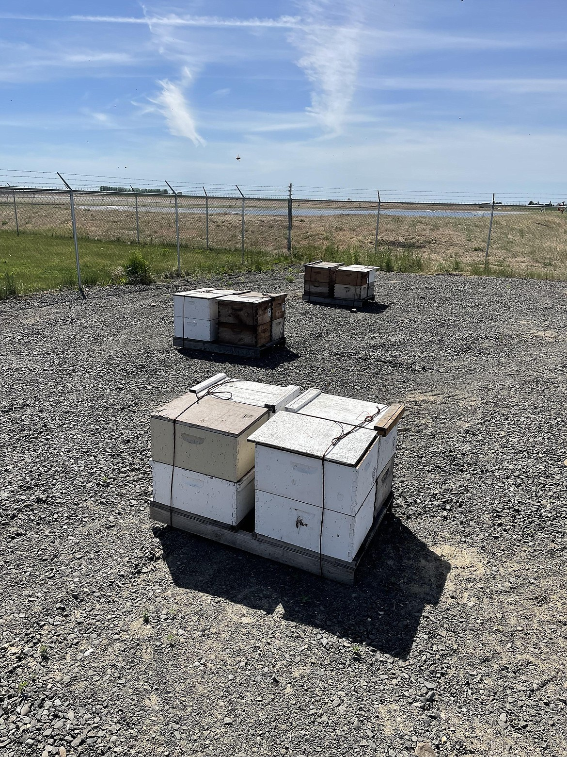 Beehives newly returned from California awaiting inspection at WSU's Honey Bee and Pollinator Research, Extension and Education Facility near Othello.