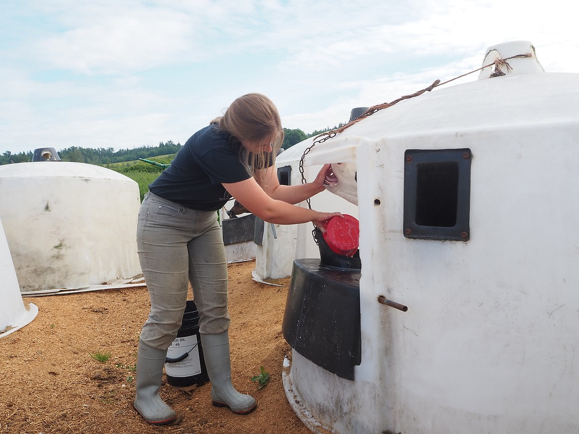 Juliana LeClare feeds cows on her family's dairy farm in Mt. Vernon. LeClare was named Washington State University's Aggie of the Year for 2021.