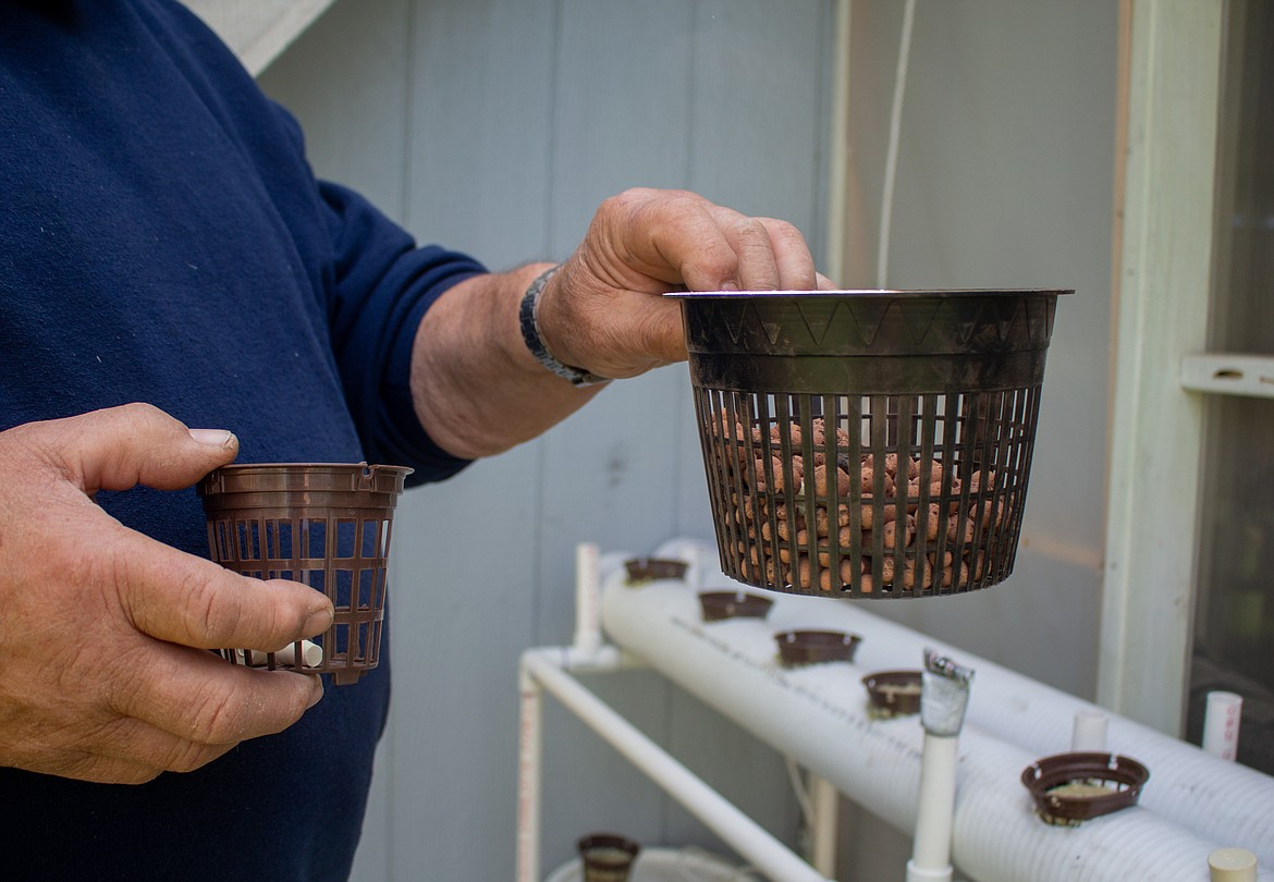 Ken Rosecrans holds up some of the buckets he uses in his hydroponic growing setup to hold seeds in his backyard.