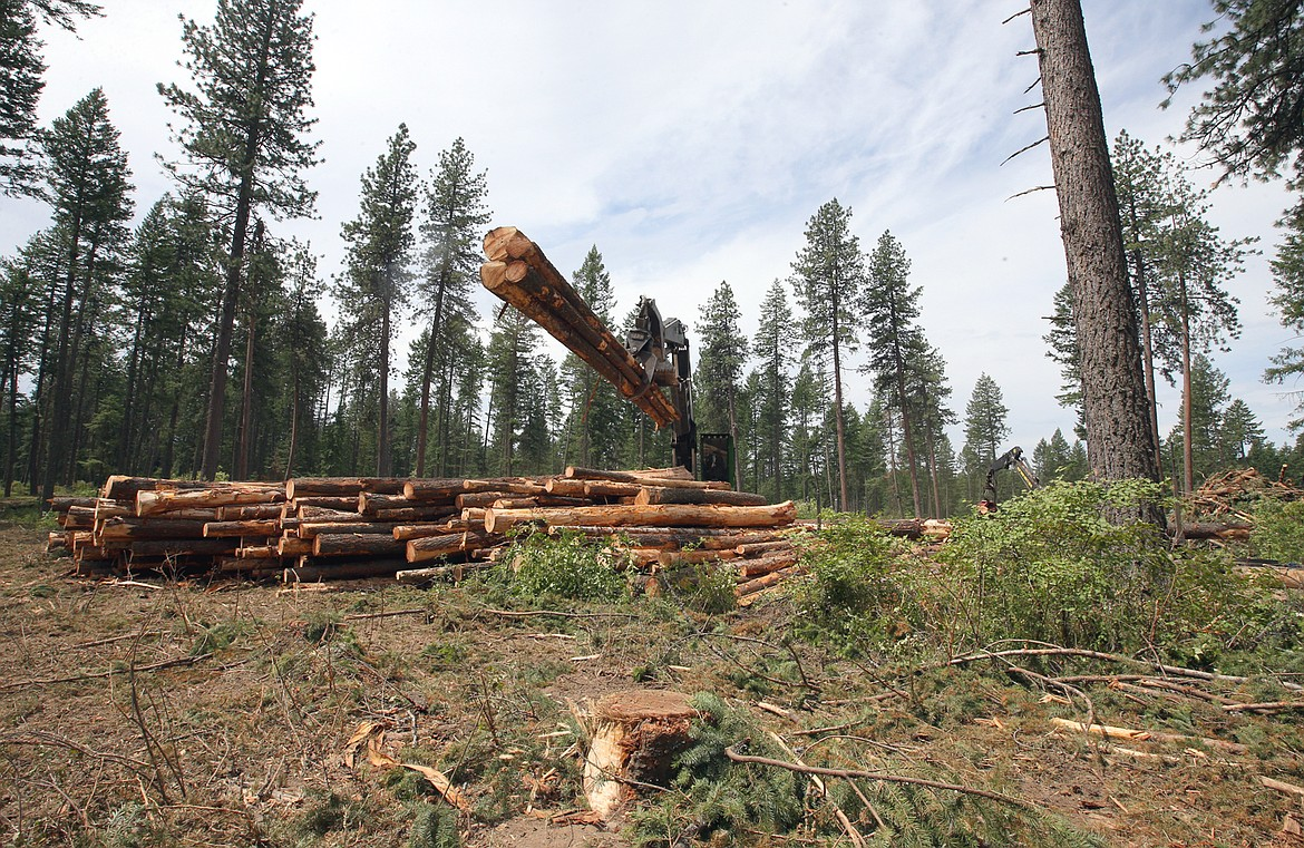 Trees are removed from English Point Wednesday.
