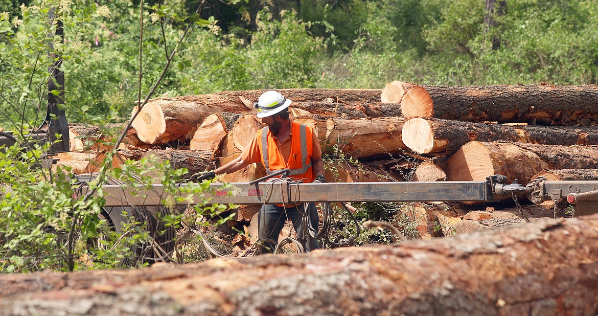 A logger prepares equipment to haul away trees at English Point on Wednesday.