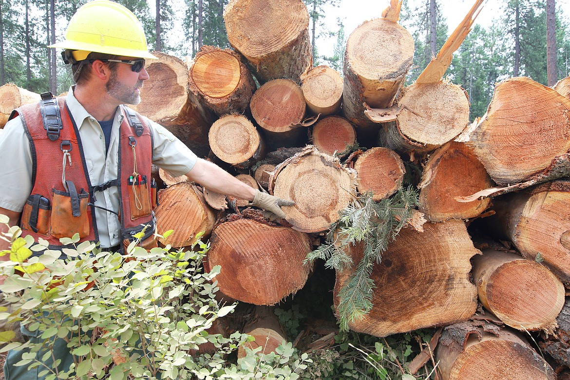 Rob Tomczak, IPNF timber sale contracting officer, points out disease in some of the trees removed at English Point.