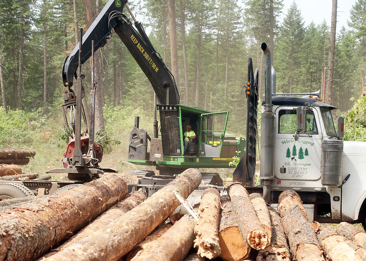 The English Point Forest Health Protection project is underway.