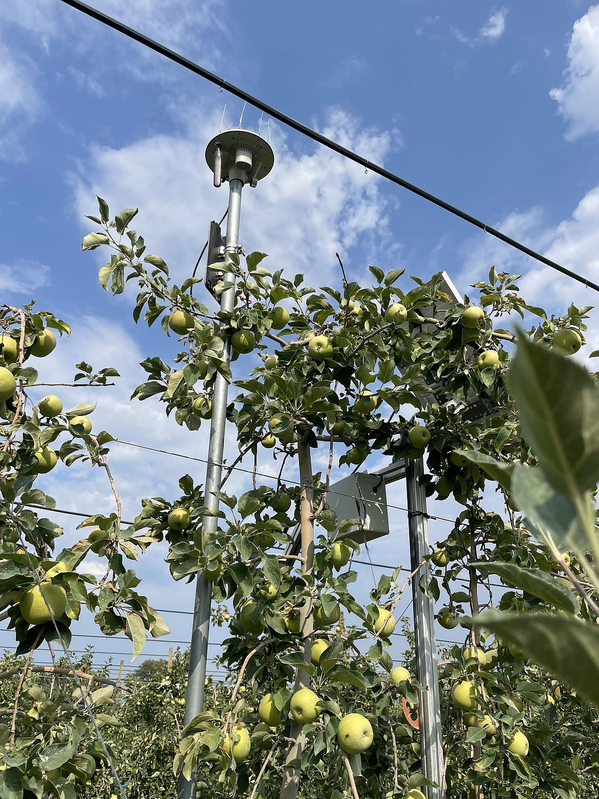 Sensors in the Smart Orchard.