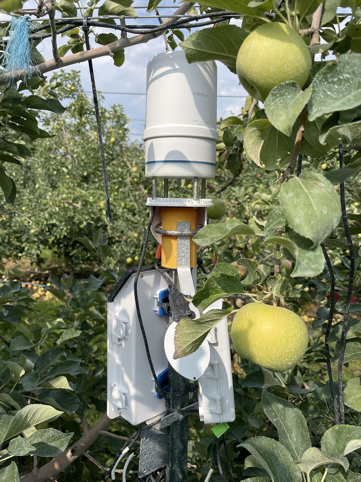 A small weather station measuring temperature, wind speed and relative humidity inside the Smart Orchard project.