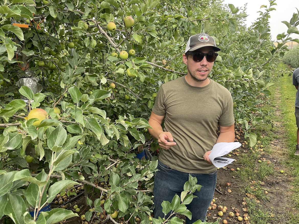WSU researcher Lee Kalscits shows how a dendrometer is used to measure the growth of an apple in innov8.ag's Smart Orchard project near Grandview.
