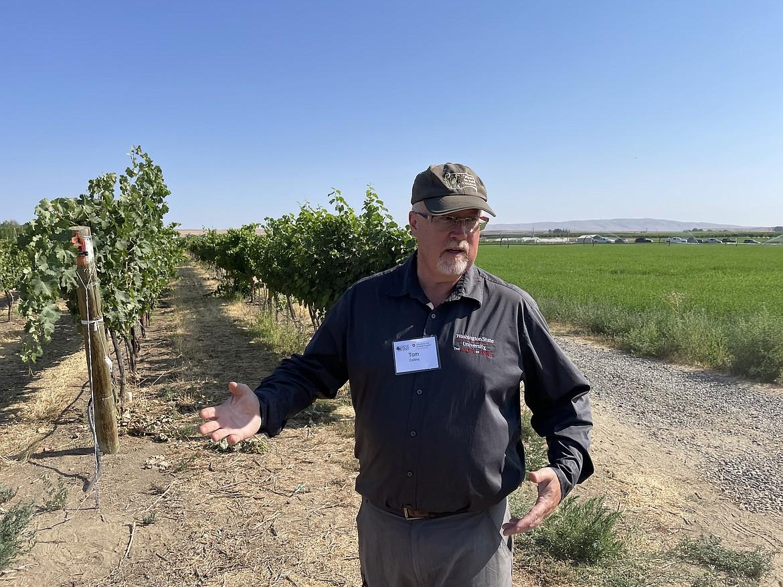 WSU wine researcher Tom Collins.